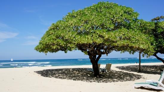 private-beach (1)