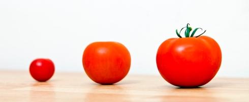 grow-tomatoes
